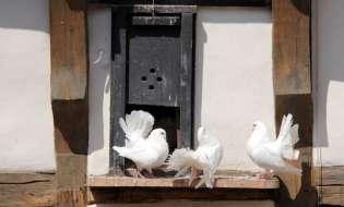 Biosecuritatea pentru crescatoriile de porumbei