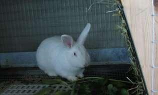Medicina Preventiva la iepuri